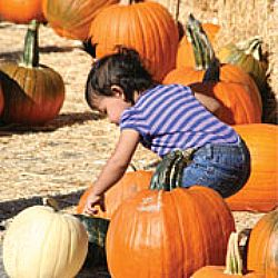 The Calabasas Pumpkin Festival has been a legendary destination since its inception in 1972. Photo: Courtesy of the Calabasas Chamber of Commerce.