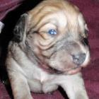 Patsy's puppy