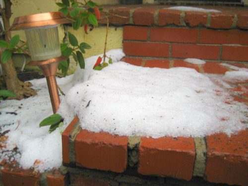 Hail, the size of peas, slid off a Studio City rooftop during a rainstorm February 9 to form what looks like a pile of snow.   Photo: Karen Young