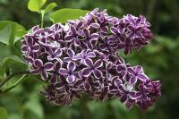 Spring planting deals at Descanso Gardens