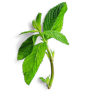 how to cut mint leaves for cooking