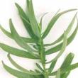 herb110
